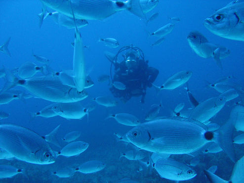 diving-with-fish_4
