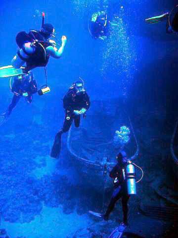 scuba-diving_l