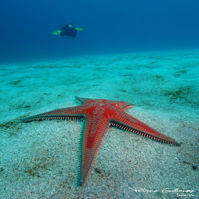 pêcheur de stars