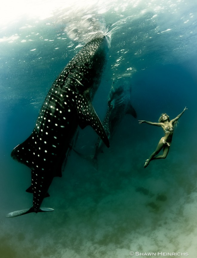 WHALE_SHARKS_0011-660x865