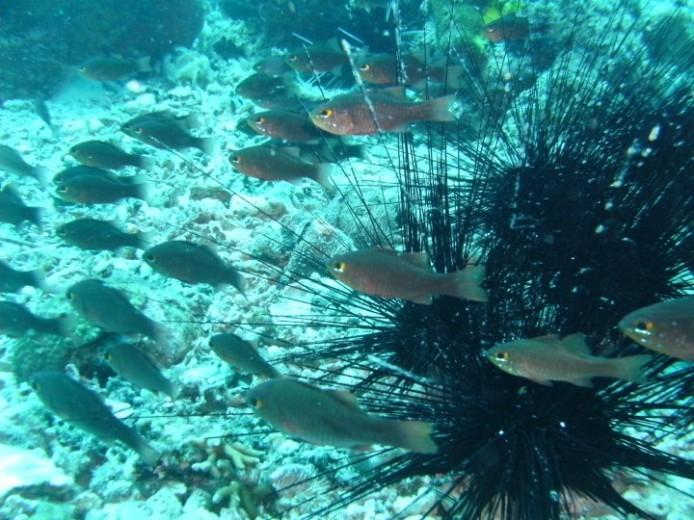 gibitngil_underwater-24-2