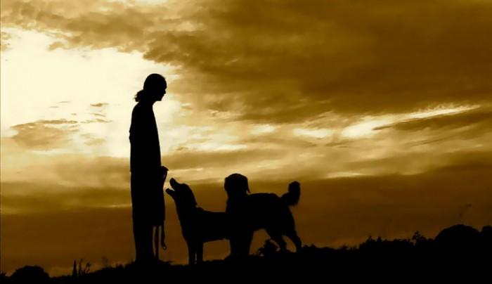 jojo-bautista-and-dogs