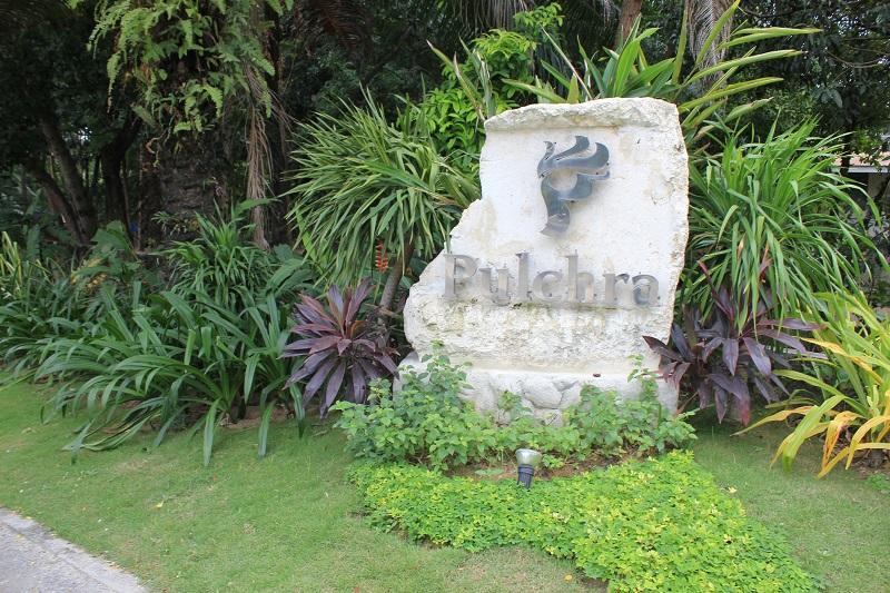 PULCHRA (4)