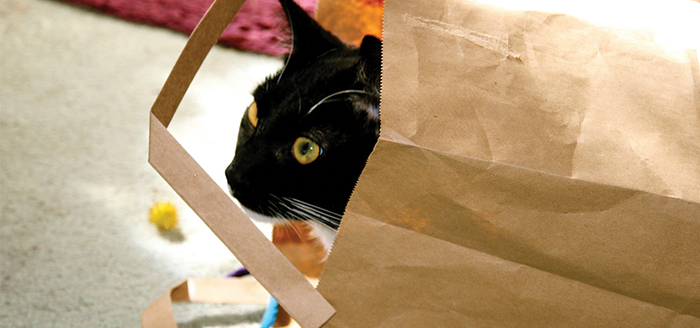 paperbag-and-cat